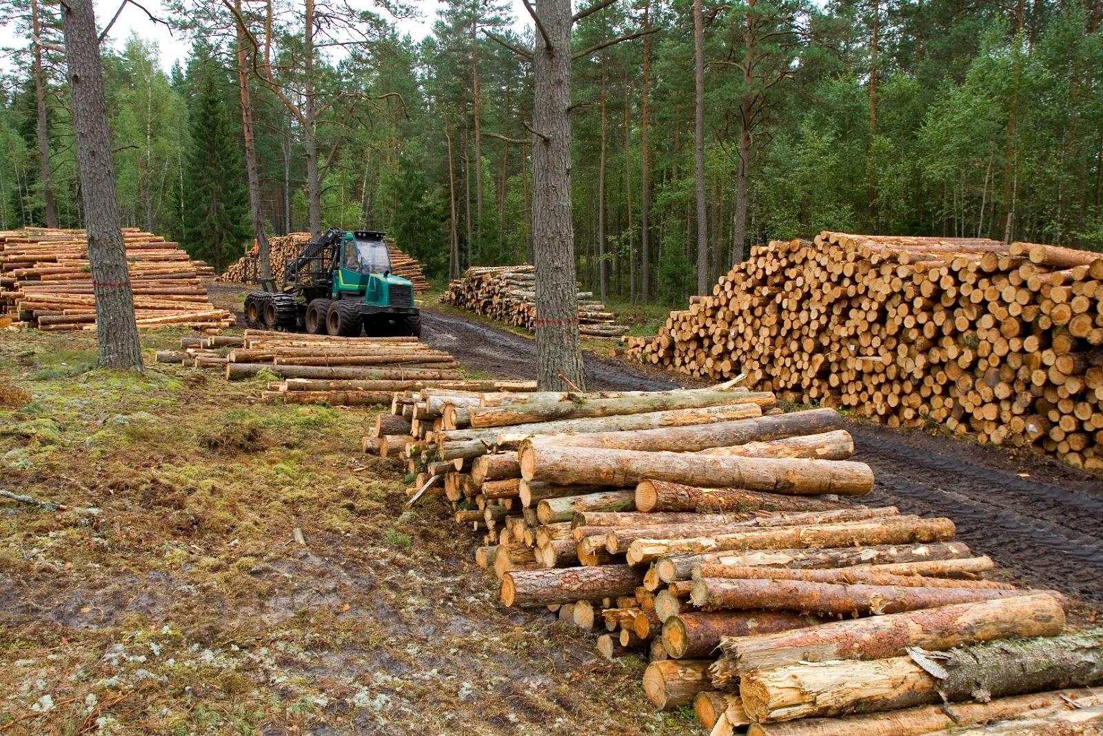 Porqu es da ina la deforestaci n como evitar la tala de for Medio en el que habitan los arboles