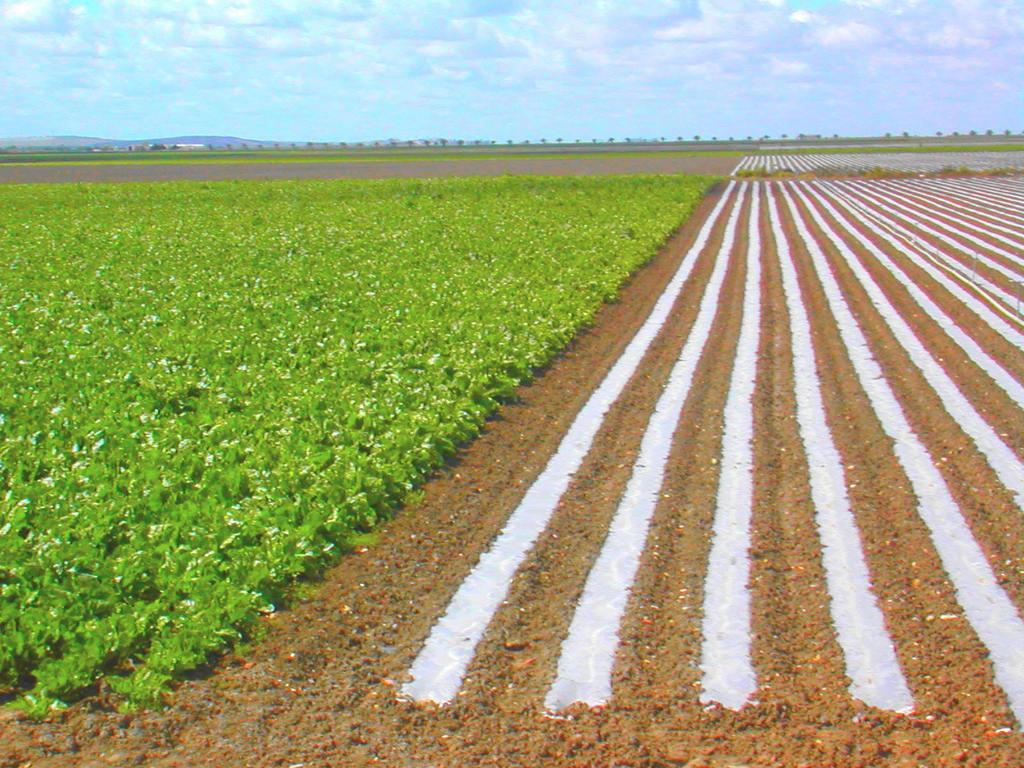 agricultura-y-agua
