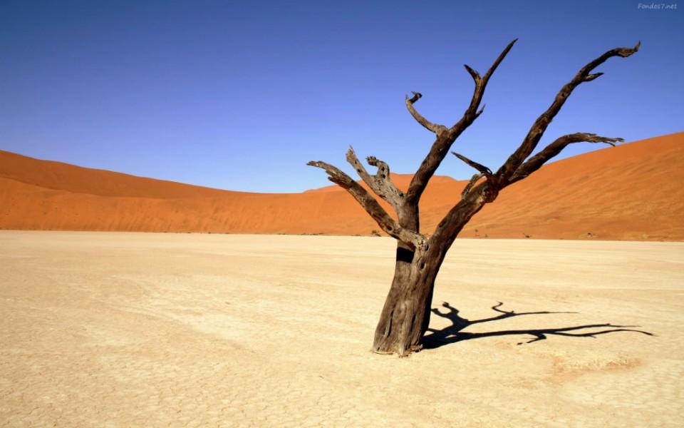 desierto-1-960x623