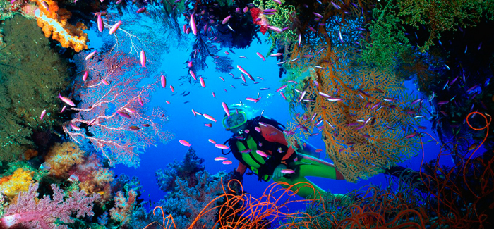 la-Gran-Barrera-de-Coral-