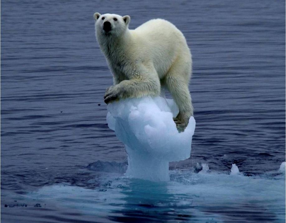 un-oso-polar-sobre-un-trozo-de-hielo-victima-del-calentamiento-global-del-clima