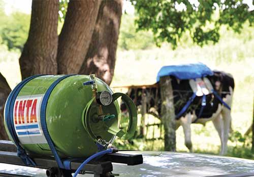 vaca-con-mochila-recuperacion-gas-metano
