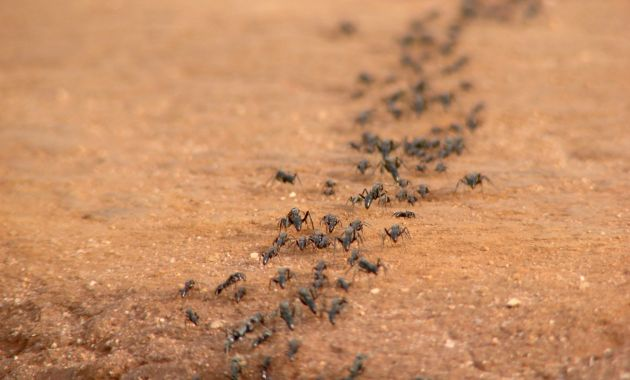 5-tips-para-prevenir-que-las-hormigas-invadan-tu-casa-2