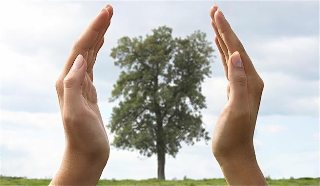 Cuidar-bosques