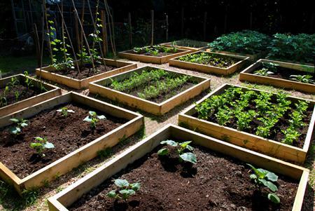 Huerta-orgánica-en-el-jardín-1-Custom