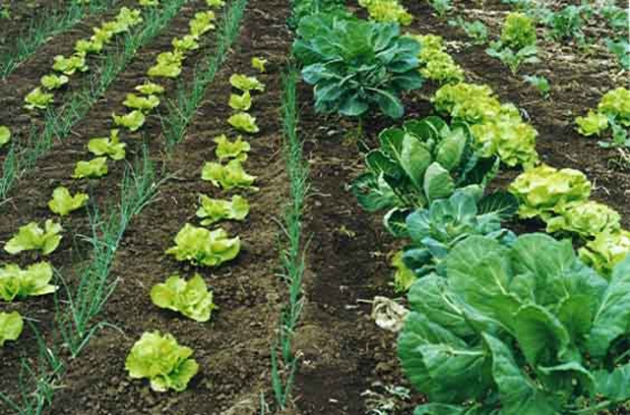 a_que_llamamos_alimentos_organicos4