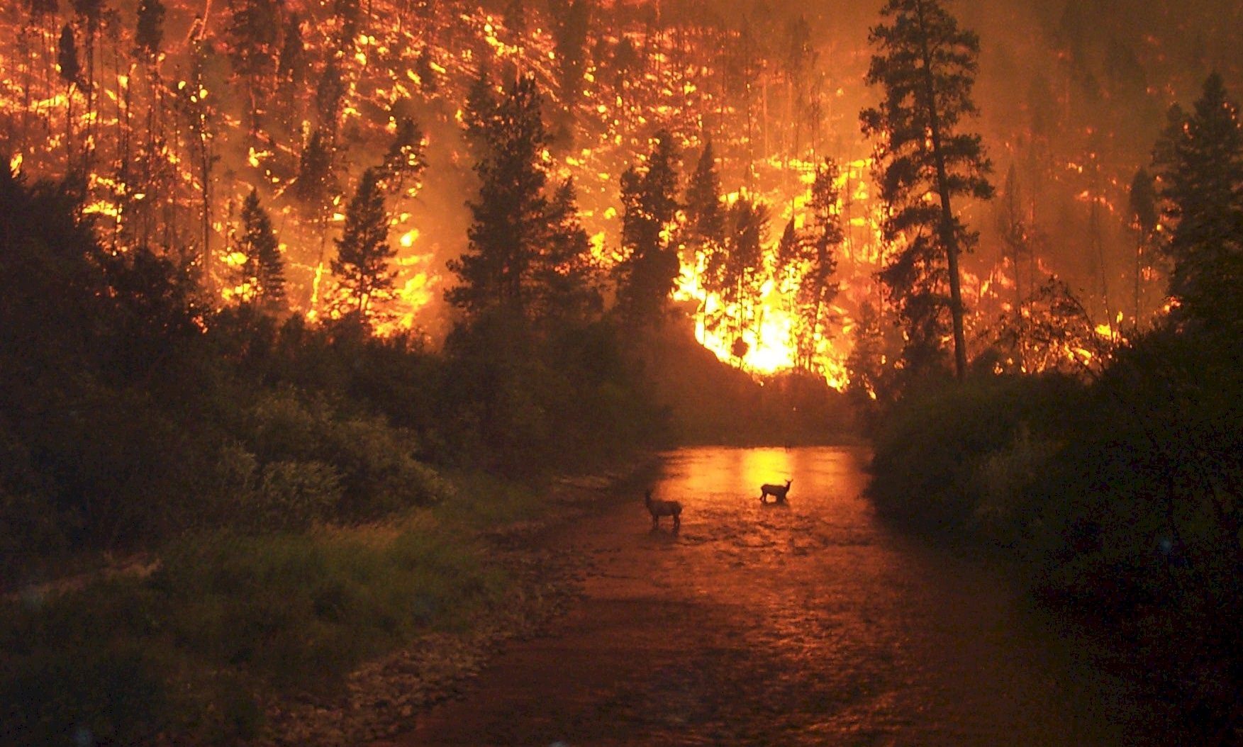 o_Incendios forestales