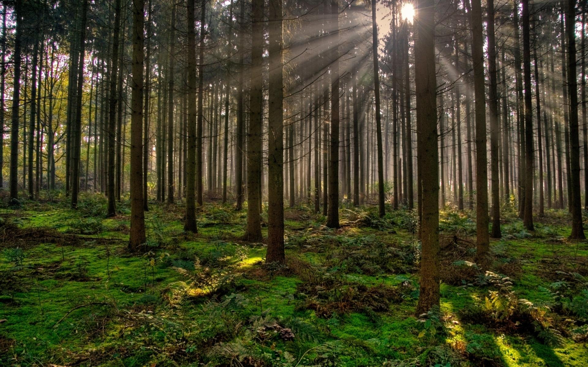 Cu les son los beneficios ambientales de los bosques - Casitas en el bosque ...
