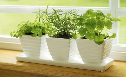 Plantas-de-interior-para-casas-rusticas-2