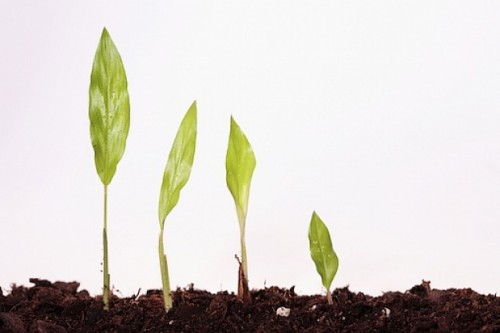 crecimiento-vegetal--flora--flora--hierba_3142938
