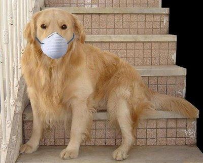 perros-doctores-alivian-hospitalizacion-de-ninos-365535_400_322_1