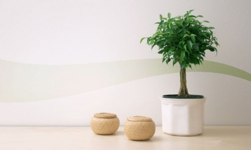 Distintas plantas que ayudan a la limpieza del aire en el - Plantas de interior purificadoras del aire del hogar ...