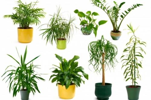 plantas-4