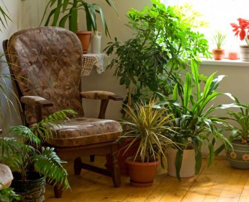 plantas-para-purificar-el-hogar-2