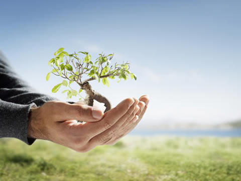 plantar-arbol1