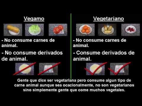 veganohqdefault