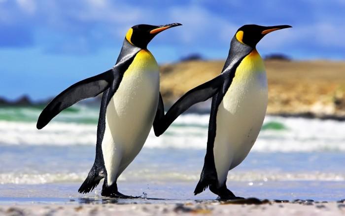 pinguinos-emperador