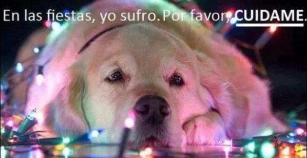 pirotecniaveterinario-recomienda-sedar-los-perros-susto-fuegos-artificiales-640x3301