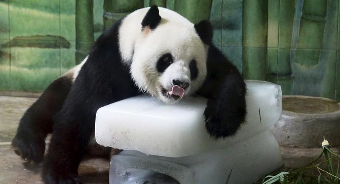 panda1040147478