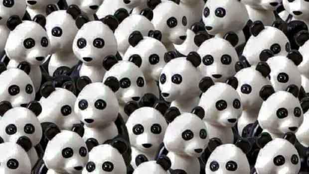 panda56994ae328perrito2
