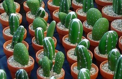 piedras-cactus-manualidades