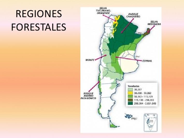 bosques-nativos-1-728
