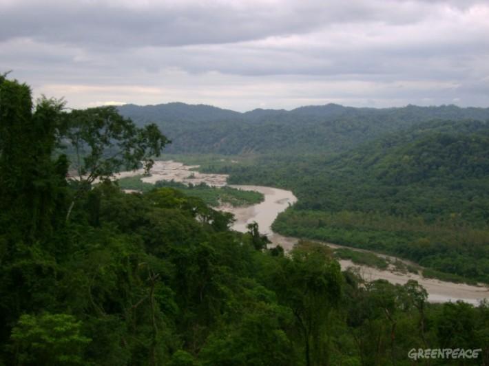 bosques-nativos-foto-alta