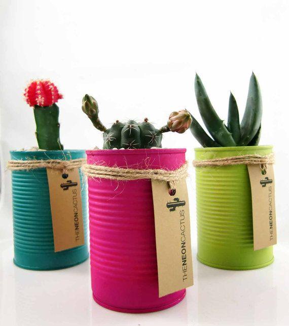 latas_cactus