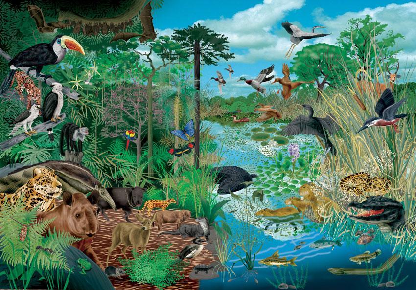 ecosistemawiki
