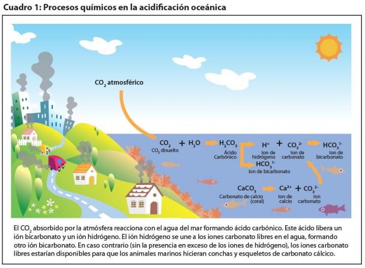 ciclo-co2-oceano-acidificacion
