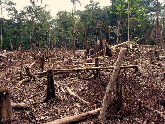 deforestation_in_the_amazon-jpg-662x0_q100_crop-scale