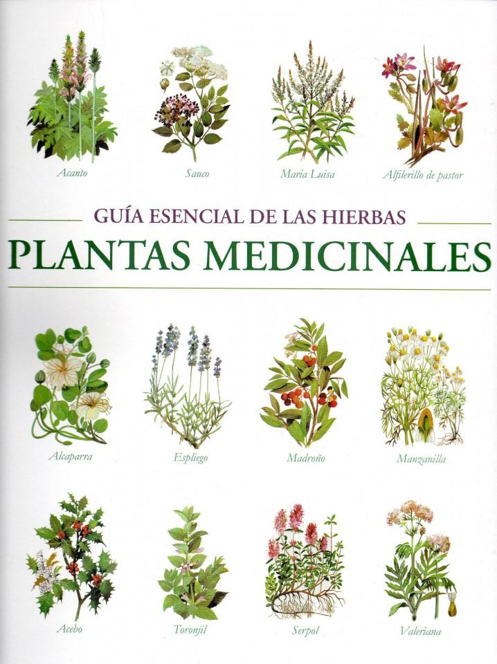 Plantas medicinales c mo cultivarlas y para qu sirven for 10 plantas ornamentales y para que sirven