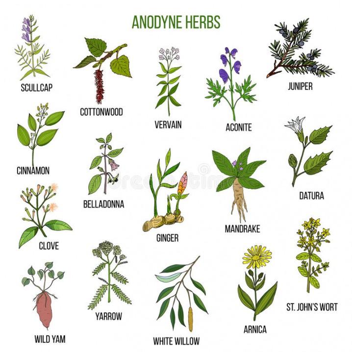 Plantas medicinales c mo cultivarlas y para qu sirven for Planta decorativa con propiedades medicinales crucigrama