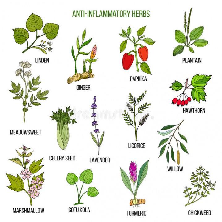 Plantas Medicinales Cómo Cultivarlas Y Para Qué Sirven Ecología Hoy